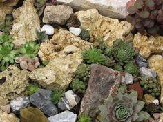 Steingarten mit Dachwurzen