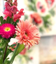 Gerbera Daisy and ot