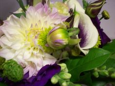 Purple and white bi colored dahlia. How cool is that/