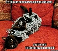 While this is a cute meme, please don't let your cat play with yarn unsupervised. It can easily catch on kitty's rough tongue and be swallowed, leading anywhere from an expensive surgery or to your cat's death.