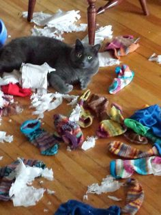 Thought I would help sort the socks...and we're out of toilet paper!