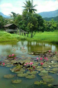 บึงบัว...ใกล้ๆบ้าน Beautiful Landscape Photography, Beautiful Landscapes, Nature Photography, Watercolor Landscape, Landscape Paintings, Village Photography, Vietnam Voyage, Village Photos, Indian Village