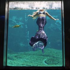Real mermaid. real turtle. If I had grown up in Weeki Wachee, I totally would have been one!