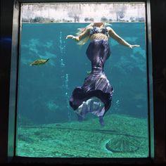 Mermaid of Weeki Wachee Springs Photo: Annie Collinge
