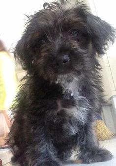 mi nuevo perrito se llama bubu ,,tiene 3 meses y medio  que os parece