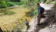 Top Ausflug: Auf dem Holzweg ins Mendlingtal | Wiederunterwegs.com Wayfarer, Mens Sunglasses, Style, Day Trips, Hiking, Summer, Swag, Men's Sunglasses, Outfits