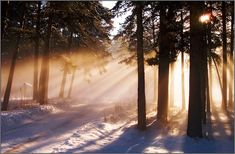 , Forest etudes: Winter, Winter light, The Creation of the Day. Snow Forest, Cool Photos, Amazing Photos, Winter Light, Outdoor Photos, Landscape Photos, Moonlight, Sunset, Awesome