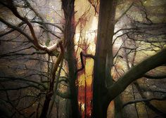 Somewhere in the Forest by Hal Halli Wall Art, Plants, Collage, Trees, Beauty, Collages, Tree Structure, Collage Art, Plant