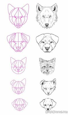 art desenho An exquisite fuck-ton of canine references. To see the text of the larger images, you gotta reverse-image search em. [From various sources] Drawing Techniques, Drawing Tips, Drawing Reference, Drawing Sketches, Painting & Drawing, Dog Drawing Tutorial, Sketching, Design Reference, Anime Drawing Tutorials
