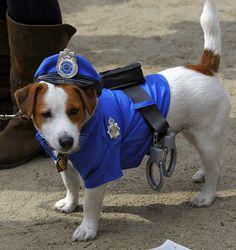 101 mascotas | disfraces para perros | disfraces mascotas: Disfraces de Policia para perros