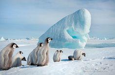 Cool Chicks. #antarctica