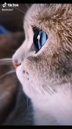 Cute Wild Animals, Super Cute Animals, Cute Little Animals, Funny Cute Cats, Funny Cats And Dogs, Cute Funny Animals, Cool Cats, Pretty Cats, Beautiful Cats