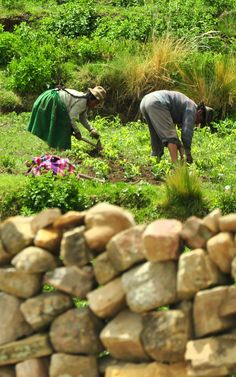 Farming in Isla del Sol, Bolivia --- Photo taken by Esmeralda Spiteri