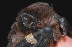 The secret life of New Zealand's bats Black Box, Secret Life, Bats, New Zealand, Peace, Sky, Group, Sunset, Cool Stuff