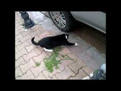 sokakta besleseniz bile sizi candan sevebilirler... seyredin, şüpheniz kalmasın  / funny cat - komik kedi