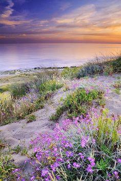 Sand dunes #janeiredalesummer