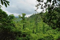 These mountains are home to many local species and a perfect spot for trekking in the rain forest. - Discover more on everyglobe.com Cambodia, Trekking, To Go, Rain, River, Explore, Mountains, World, Outdoor