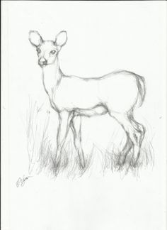 easy drawings simple drawing line deer pencil animals animal sketches realistic charcoal