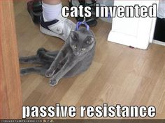 cats invented  passive resistance