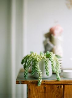 Burro's Tail: http://www.stylemepretty.com/living/2015/04/07/10-indoor-plants-you-cant-kill/