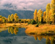 Fall color along the Snake River; Grand Teton National Park, WY by Willard Clay