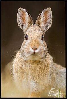 Happy Easter (rabbit_DSC7942.jpg) | Flickr - Photo Sharing!