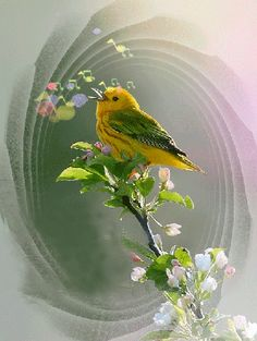 Анимация Птичка на ветке поет