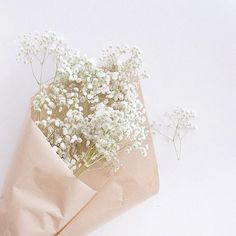 Baby Aesthetic White 70 New Ideas Aesthetic Pastel Wallpaper, Aesthetic Backgrounds, Aesthetic Wallpapers, Cream Aesthetic, Flower Aesthetic, White Flowers, Beautiful Flowers, Lightroom Gratis, Deco Floral