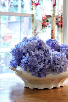 Beautiful Nikko Blue Hydrangea arranged in three different ways