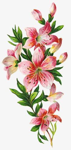 "Photo from album ""Art Flowers"" on Yandex. Arte Floral, Motif Floral, Illustration Blume, Botanical Illustration, Botanical Prints, Botanical Flowers, Flower Wallpaper, Fabric Painting, Vintage Flowers"