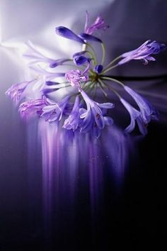 purple-flower-blumen