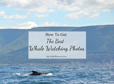 How to Get The Best Whale Watching Photos - The Full-Time Tourist Amazing Photography, Photography Tips, Pilot Whale, Whale Watching Tours, Cape Breton, Nova Scotia, East Coast, Places To Go