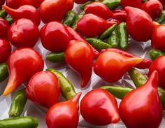Salads, Stuffed Peppers, Vegetables, Iran, Food, Cakes, How To Make Pickles, Hot Pepper Recipes, Canning Recipes