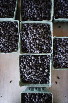 Gorgeous photo by Greta Rybus.  Wild Maine Blueberries.