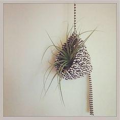 air plant crochet - Google keresés