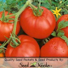 Tanaman jambu air citra tanaman buah pinterest ace 55 tomato seeds solanum lycopersicum ccuart Gallery