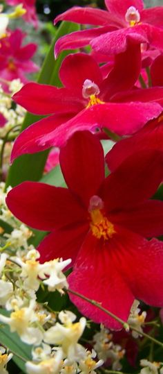 Orchid - Beautiful Flowers http://hmkh.com #flowers