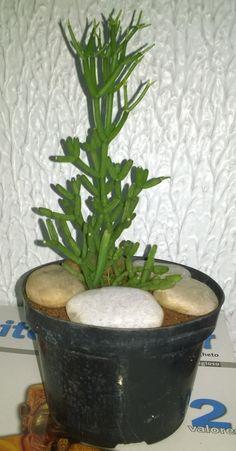 Plantas da minha coleção