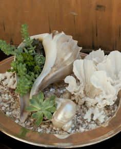 succulents in seashells | succulents in shells | Best of the Beach Decor