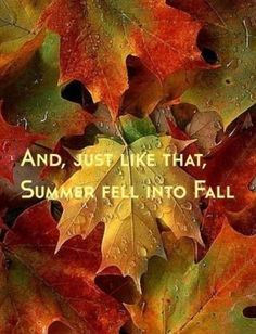And Just Like That Summer Fell Into Fall autumn fall autumn quotes fall quotes goodbye summer hello fall hello autumn hello autumn quotes goodbye summer quotes hello fall quotes Autumn Day, Autumn Summer, Autumn Leaves, Hello Autumn, Autumn Harvest, Harvest Season, Maple Leaves, Image Nature, All Nature