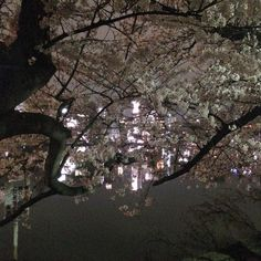ほてほてと不忍池を半周今日は桜が綺麗だったので弁天さまのとこで折り返し