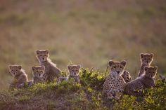 Masai Mara, Kenya - REX/Paul Goldstein/Exodus