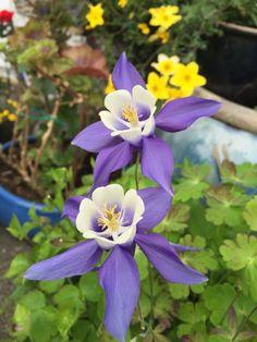 My garden Margeritten wish you all a happy summer weekend :) by Inger Johanne