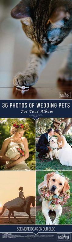 36 Gorgeous Photo Ideas Of Wedding Pets For Your Album ❤ See more: http://www.weddingforward.com/wedding-pets/ #wedding #photography