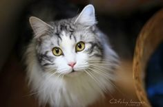 CAMERA EN KWAST: Cat'chy Images http://catchyimages.nl/