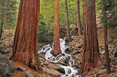 Autumn Waterfall Wallpaper Autumn Waterfall falling in love Sequoia National Park, National Forest, National Parks, Forest Wallpaper, 3d Wallpaper, Waterfall Wallpaper, Forest Waterfall, Landscape Photos, Woodland