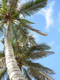 palmen op het strand Puerto Naos