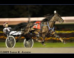 Harness Racing at Saratoga Raceway
