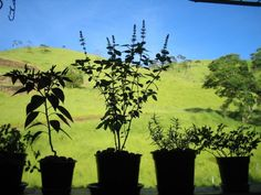 Ervas que combinam bem com outras plantas!   Use vasos de tamanho médio de 30 cm…