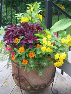 Spring/Summer-  Esperanza (Tecoma stans) Perilla Magilla 'Profusion' Zinnias Spanish Moss Rose